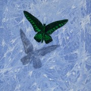 Butterfly on Blue-print 100
